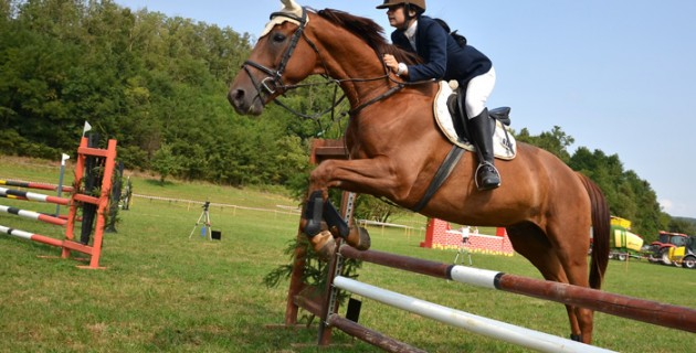 equitation-protection
