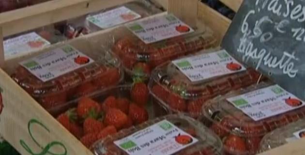 fraise-perturbateur-endocriniens