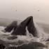 plingeur-baleine-securite