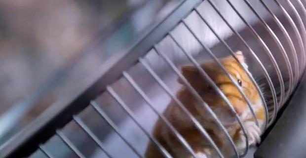 hamster-conduit-vovlvo