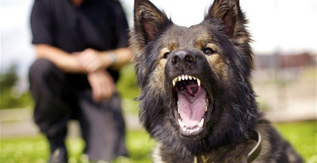 Attaque de chien : Comment se défendre ?