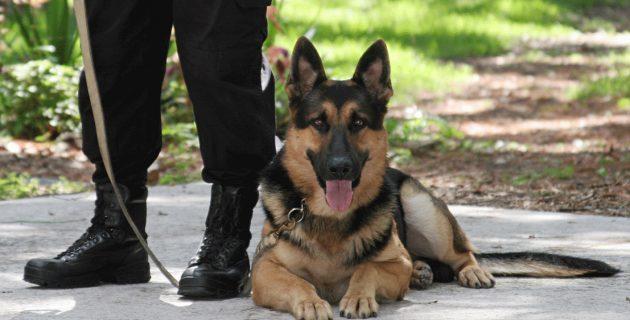 Maitre chien : métier, formation, sécurité