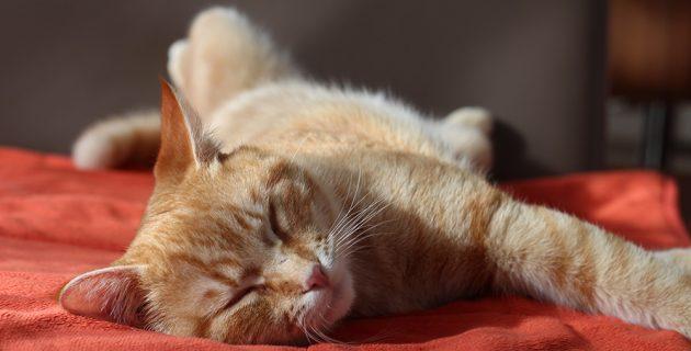 animal domestique et alarme